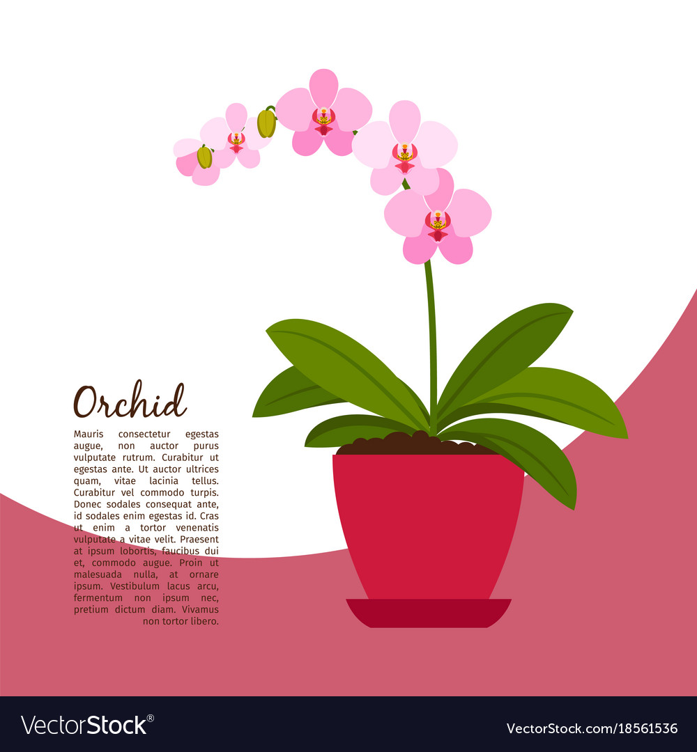 Orchid indoor plant in pot banner
