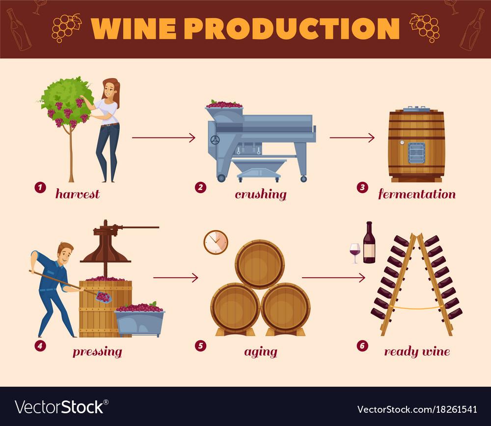 Wine production process cartoon flowchart Vector Image
