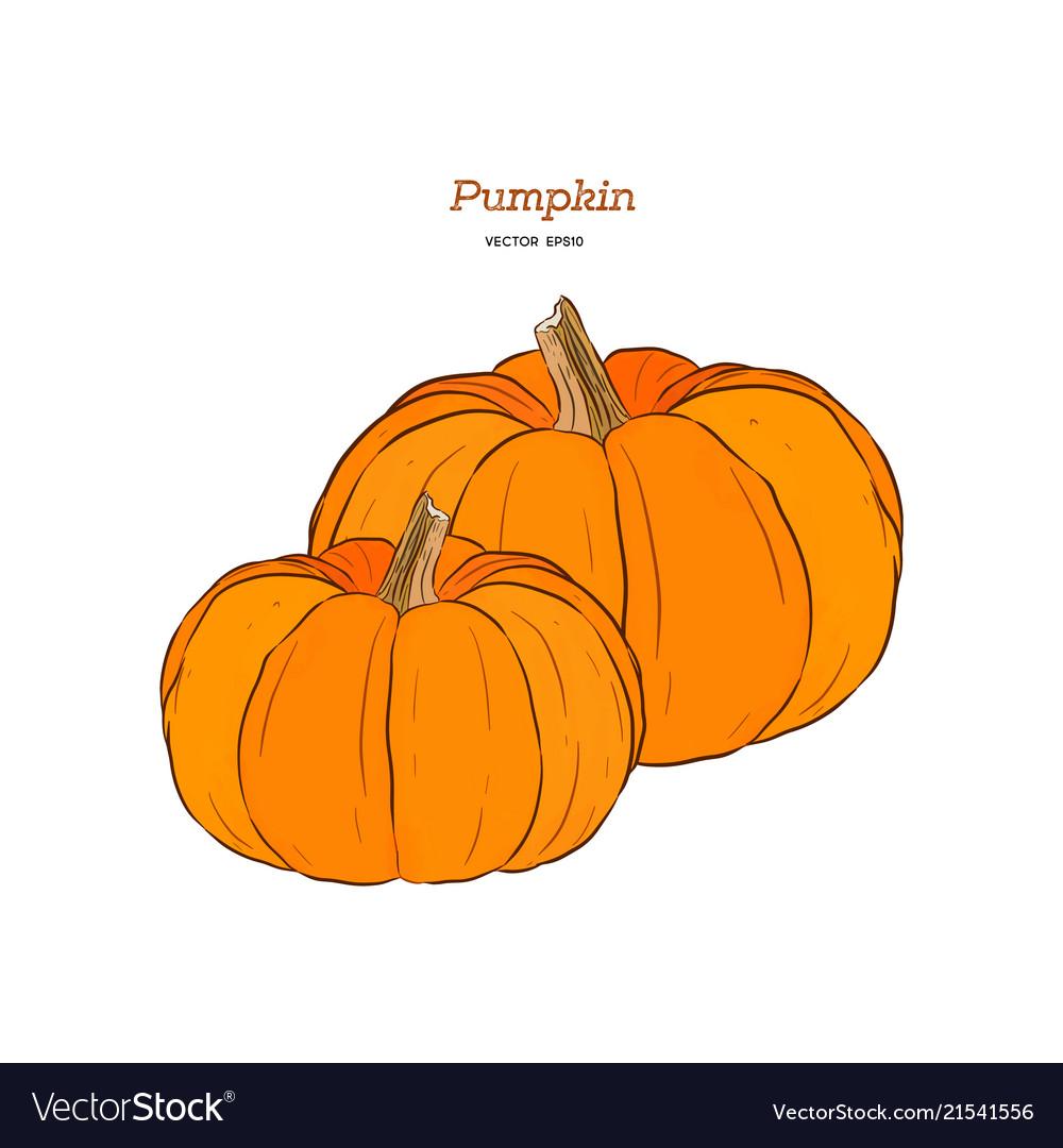 Ector hand drawn set of pumpkin