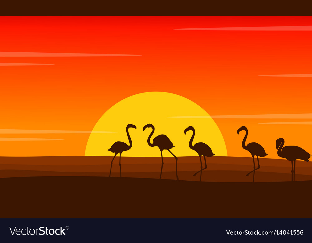 Flamingo lined scene at sunset silhouettes