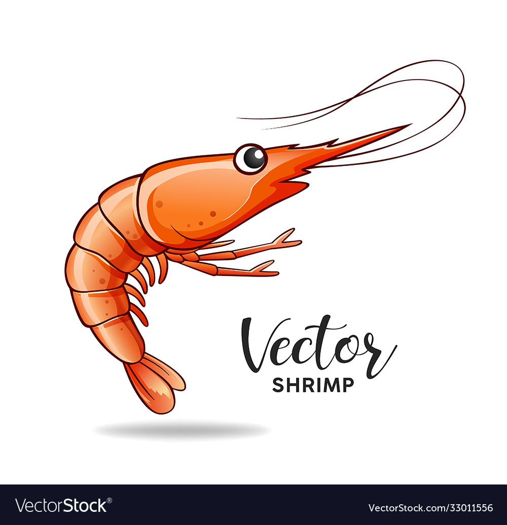 Shrimp design isolated on white background vector