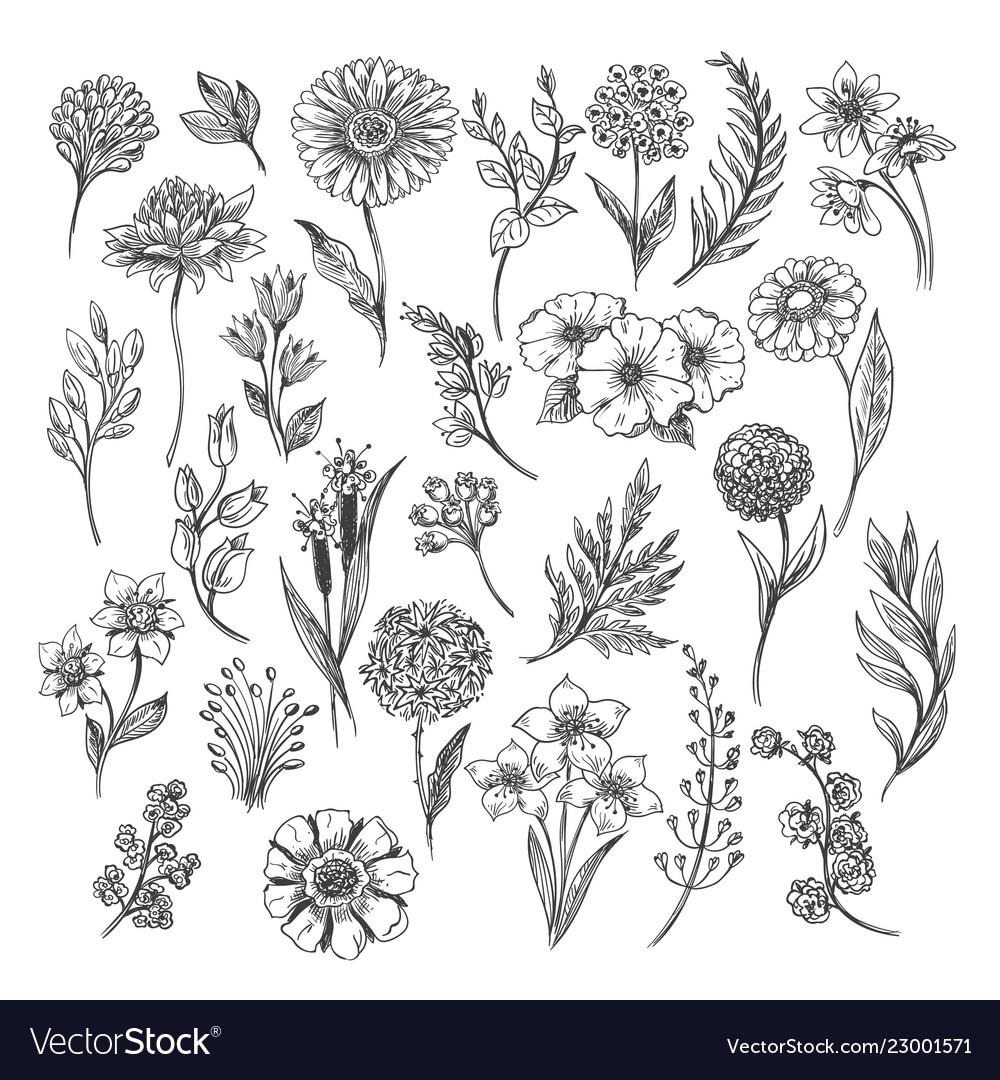 Vintage flower and herbs sketch