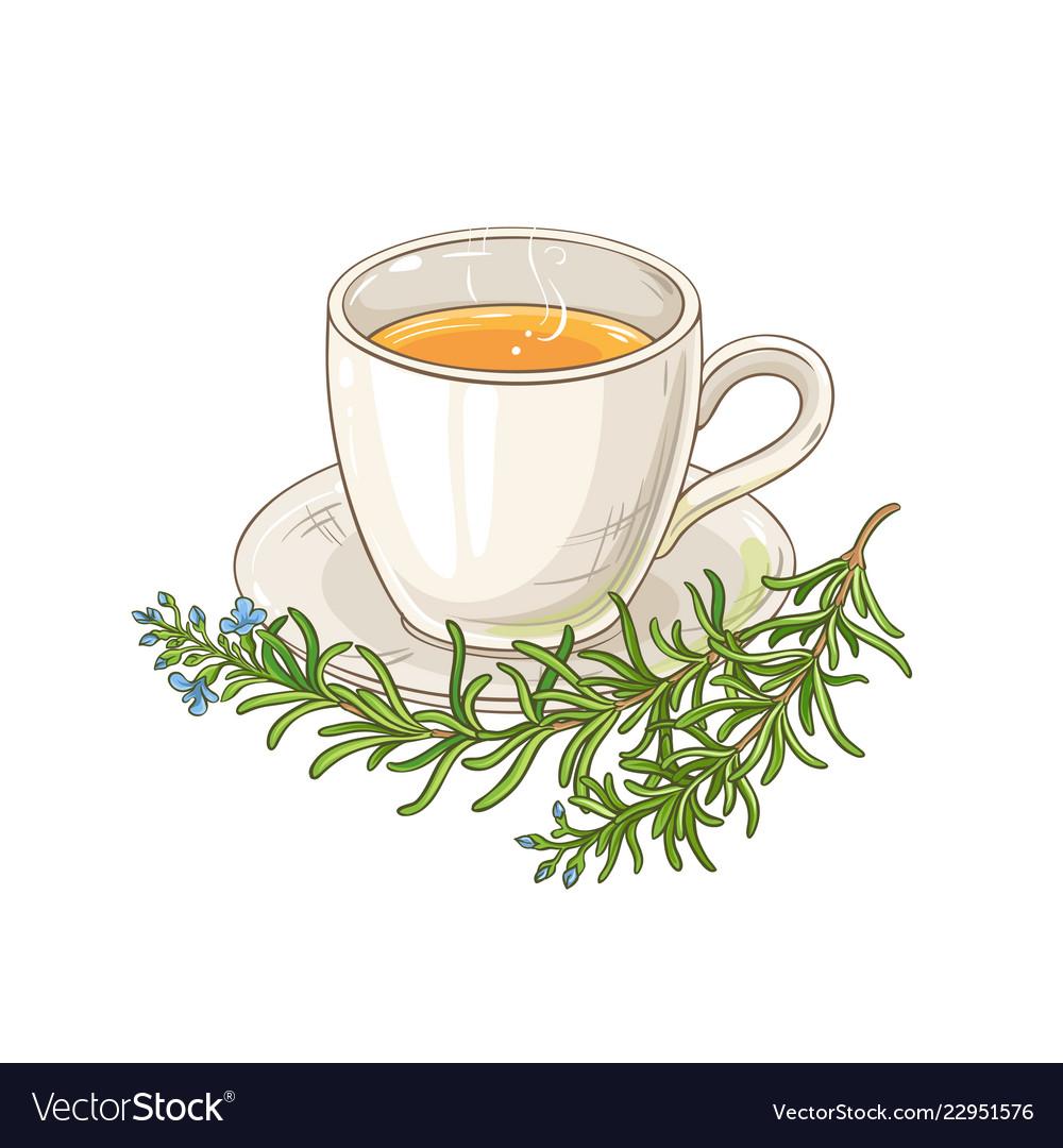 rosemary tea royalty free vector image vectorstock vectorstock