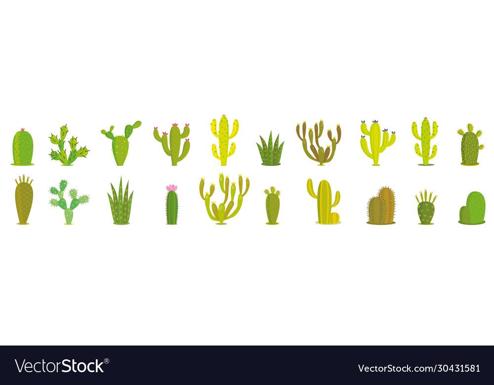 Cactus set collection exotic plants