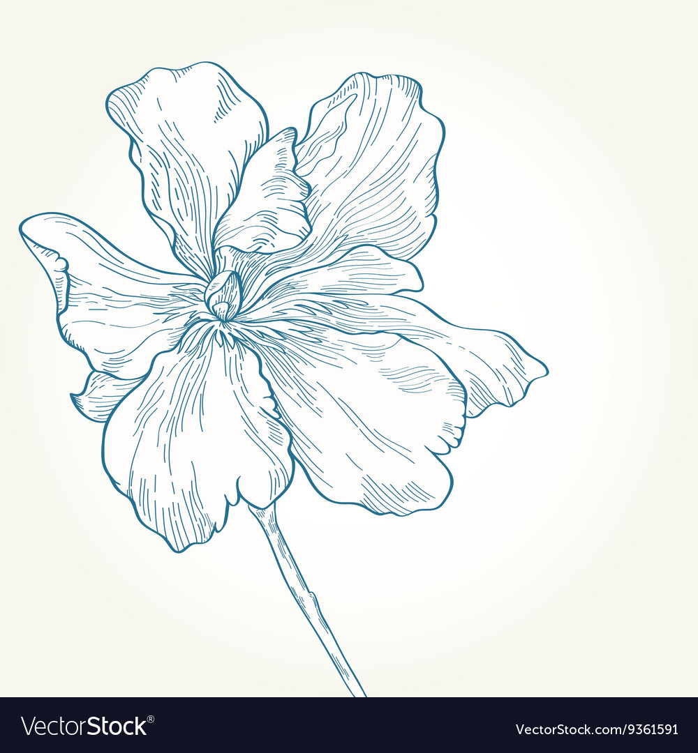 Drawing of a blue flower on a white background