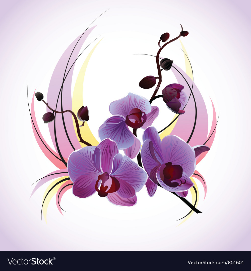 Greeting card with orchids vector image