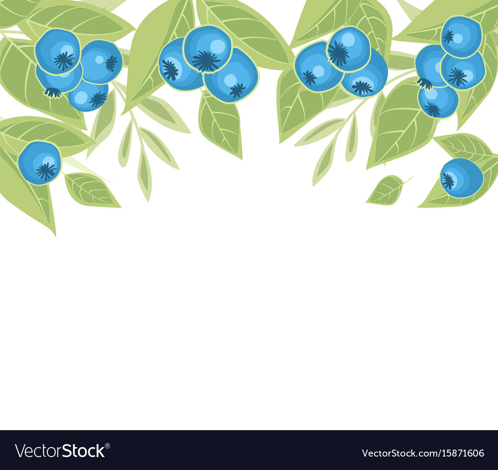 Background of blueberries fruit vector image
