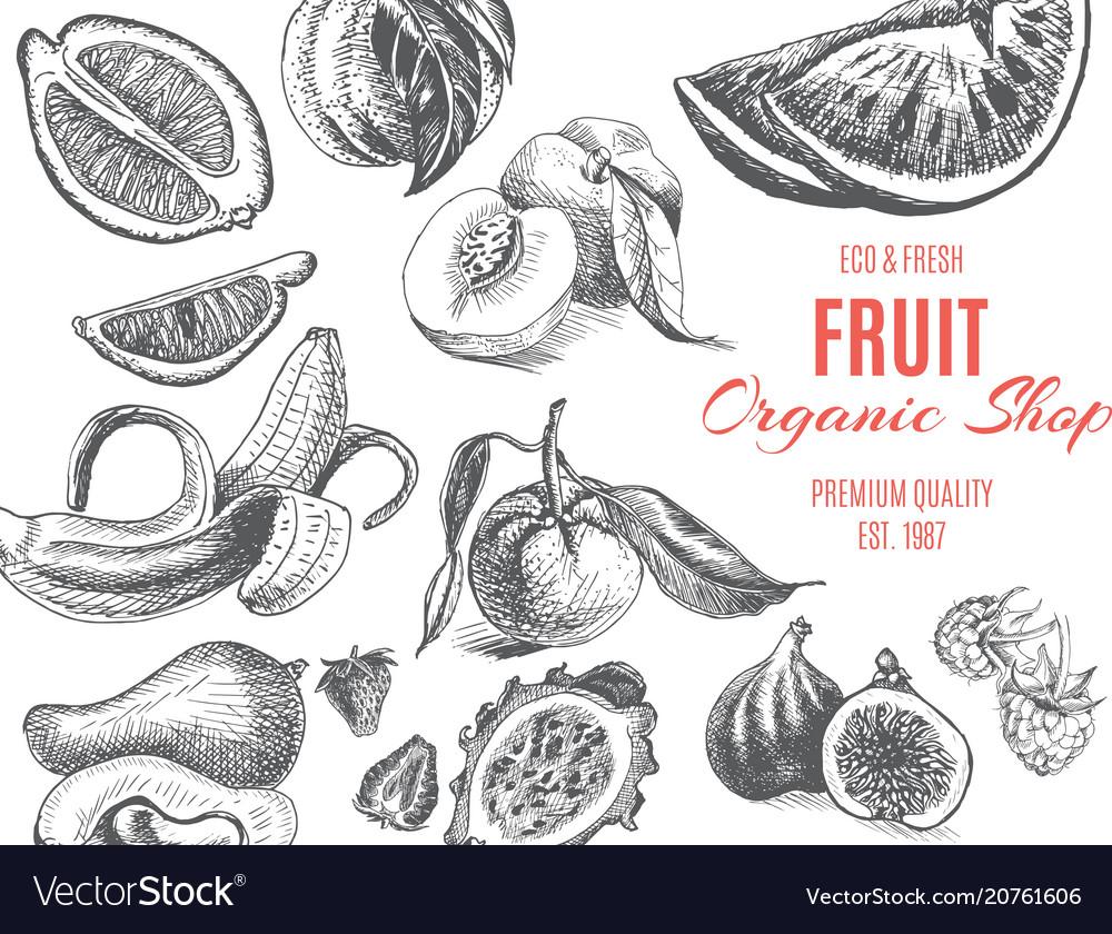 Sketch - fruits card organic