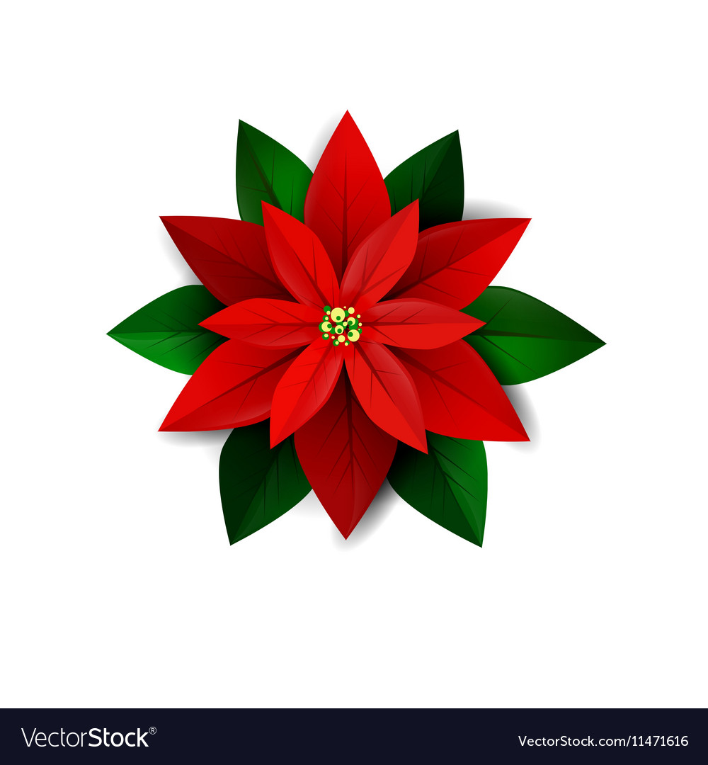 Poinsettia Flower Symbol Christmas Royalty Free Vector Image
