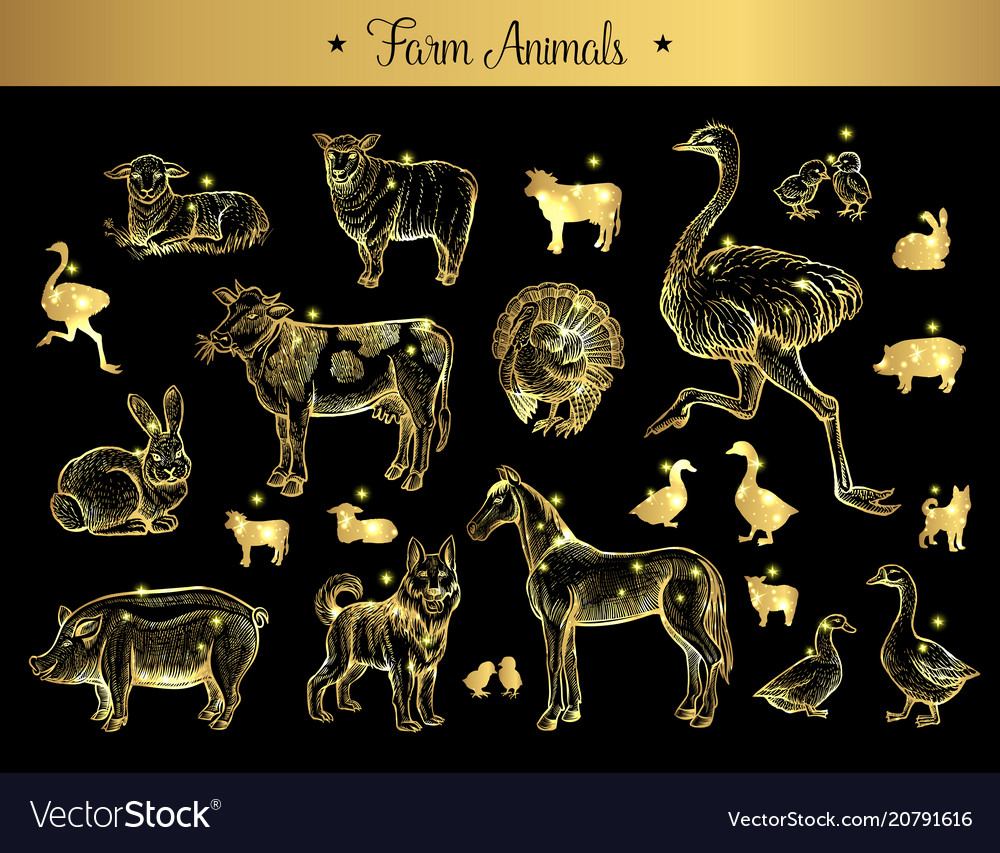 Set isolated vintage sketches farm animals