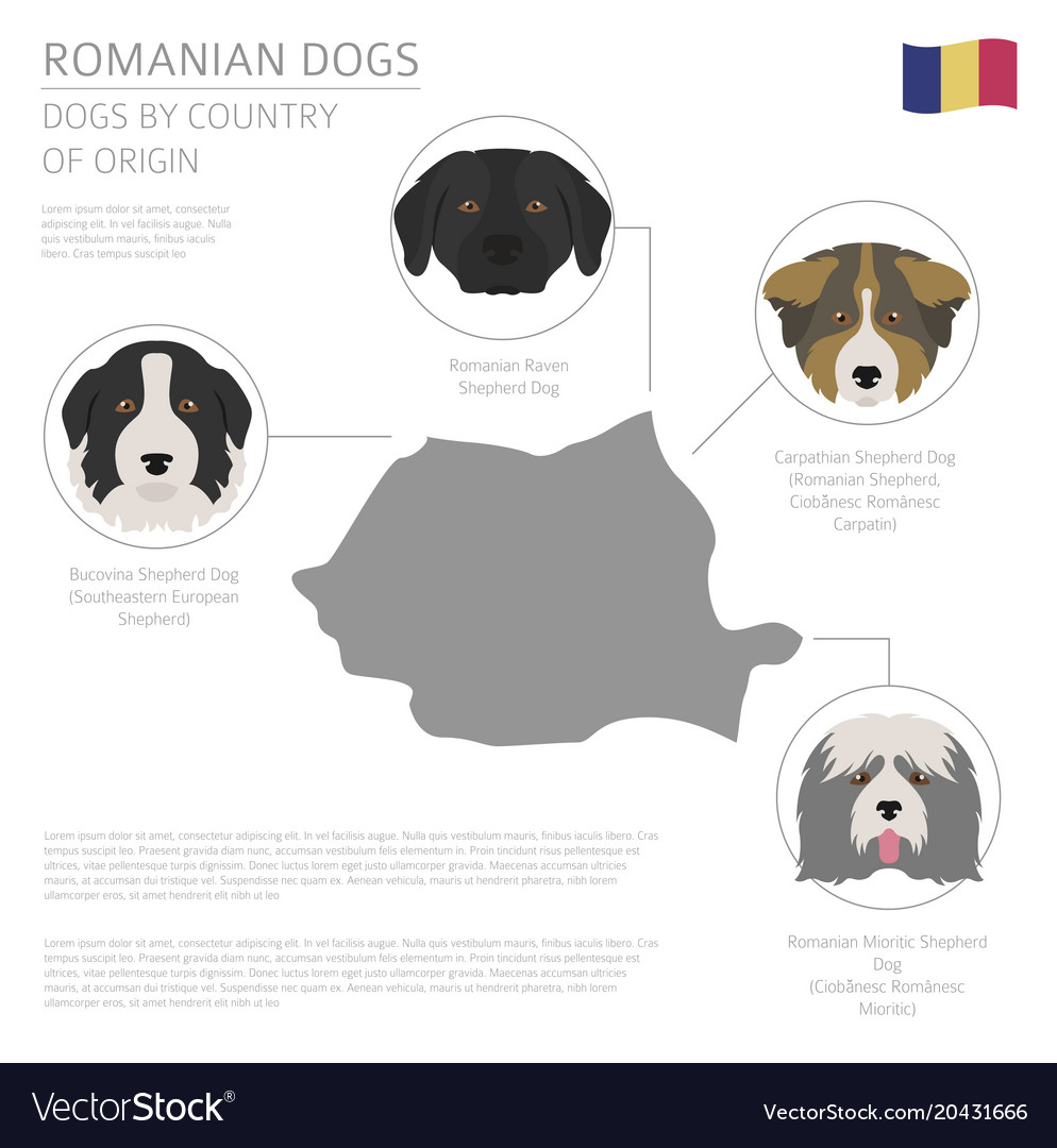 Dogs by country of origin romanian dog breeds