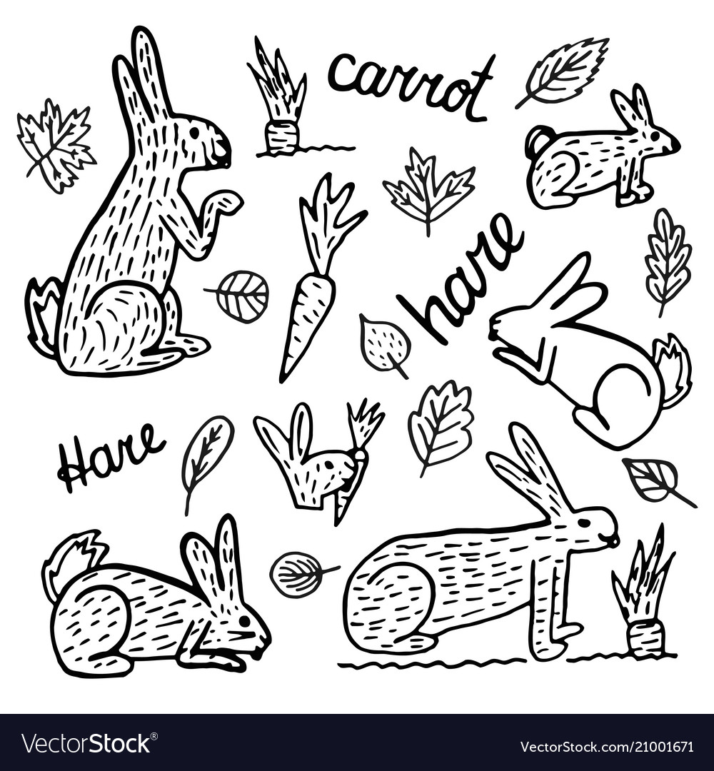 Hare hand drawn drawings