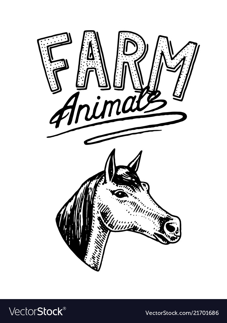 Farm animal head a domestic horse logo or
