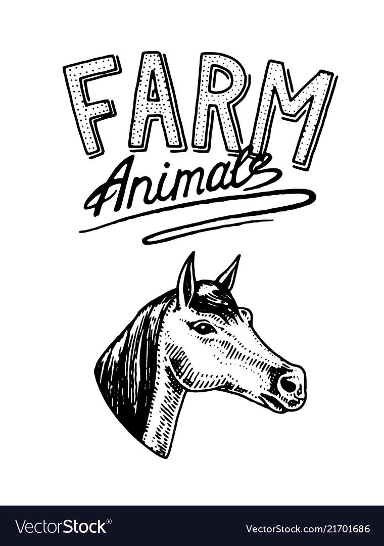 Farm animal head of a domestic horse logo or