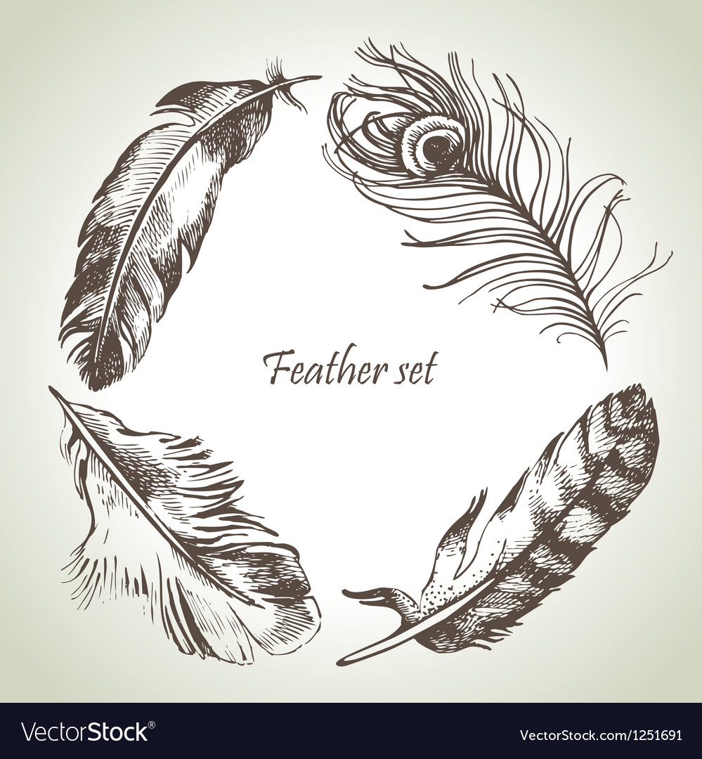Feather set hand drawn vector image