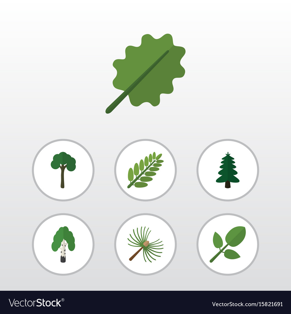 Flat icon bio set of alder leaves evergreen and