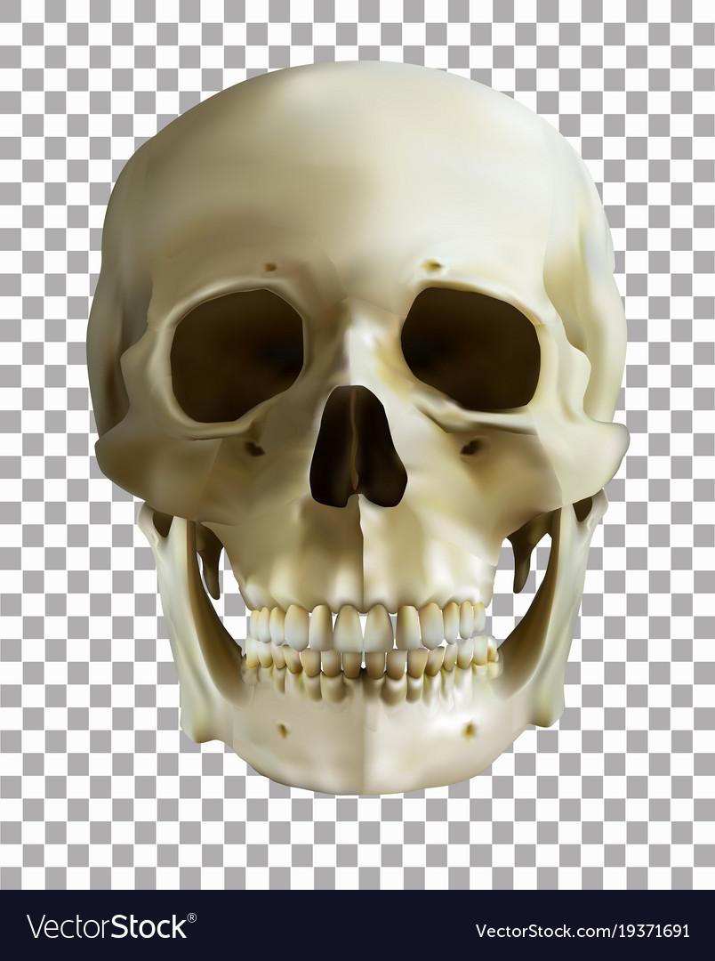 Pdf human skull