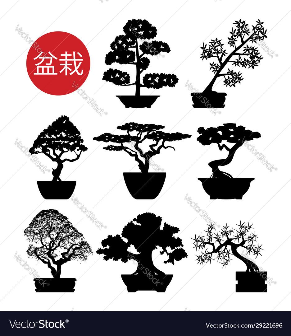 Set black and white bonsai trees