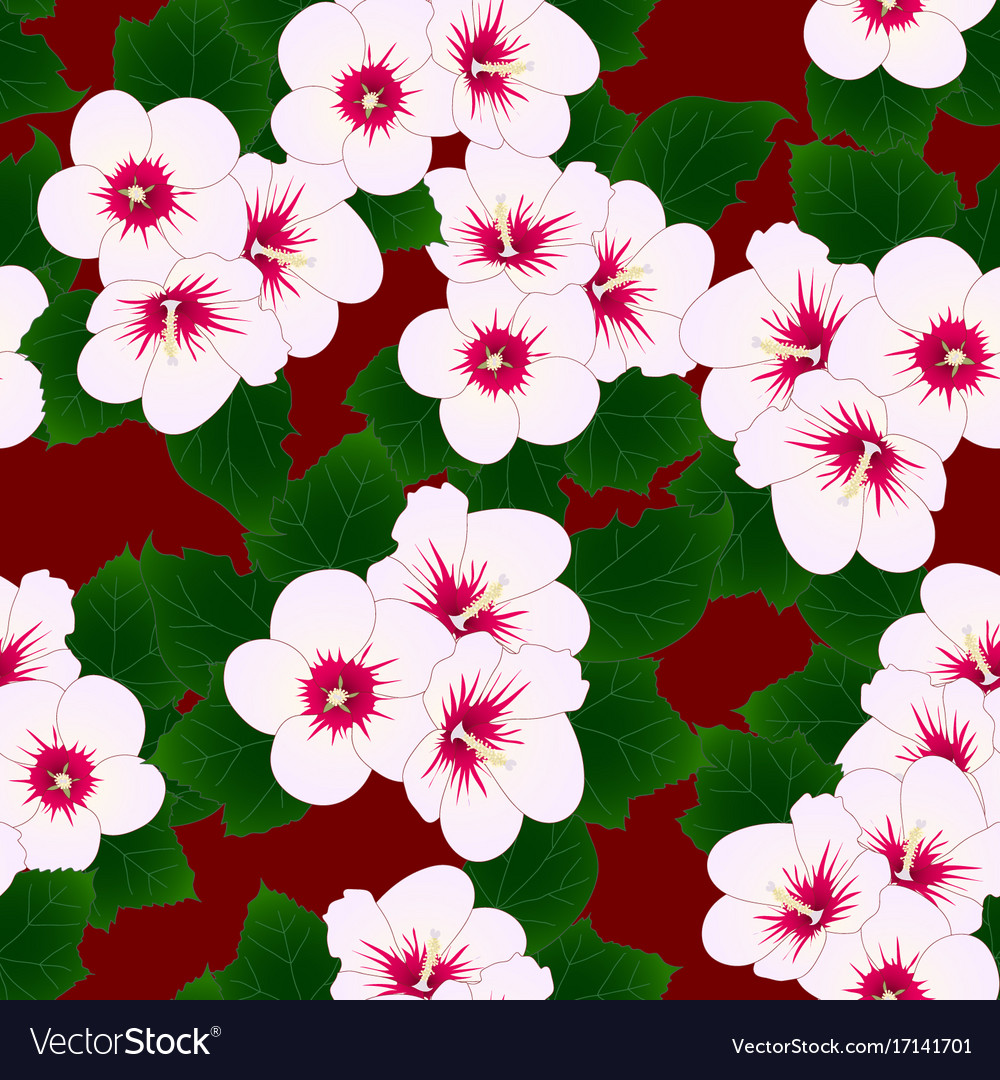 White Hibiscus Syriacus Rose Of Sharon On Red Vector Image
