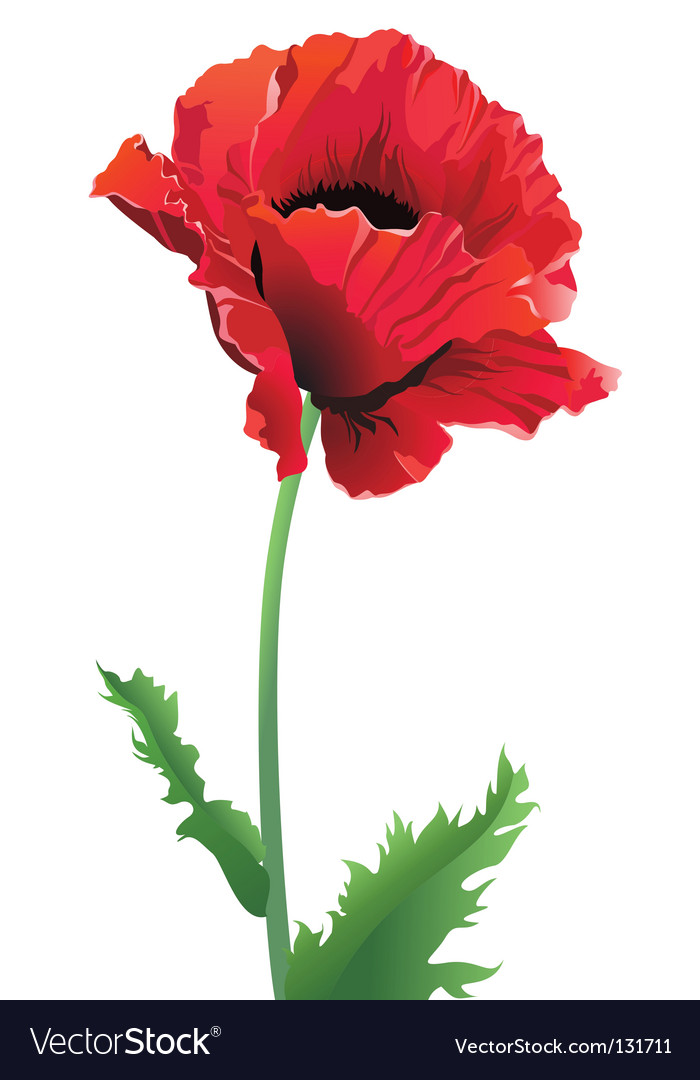 Poppy Flower Royalty Free Vector Image Vectorstock