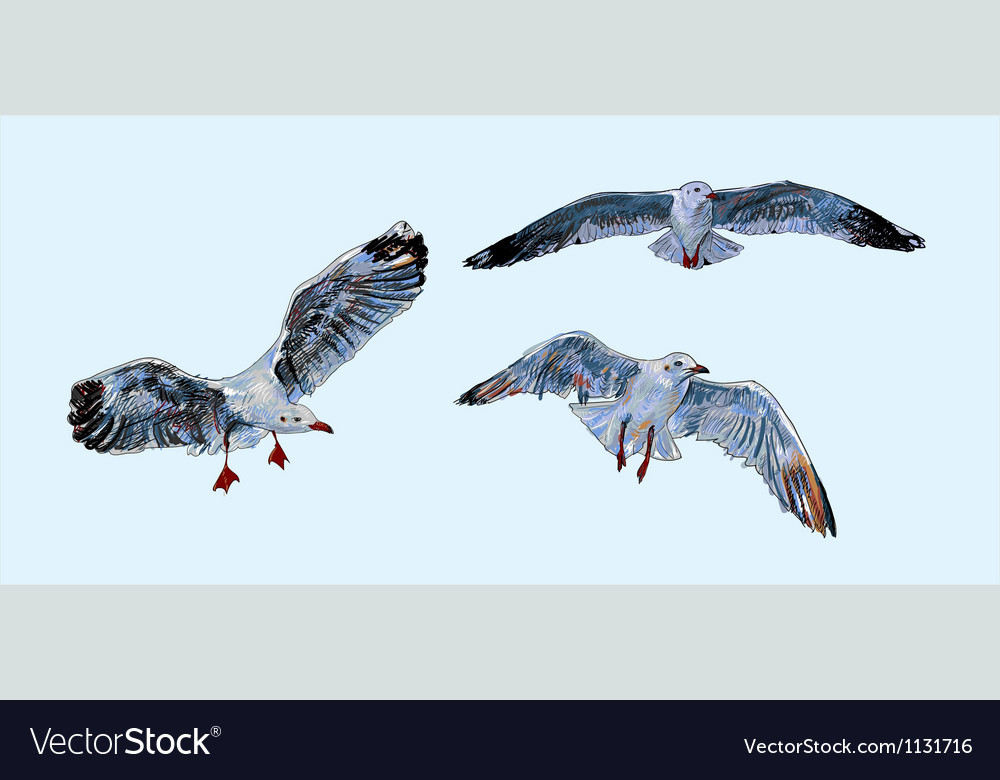 Flying Seagull vector image