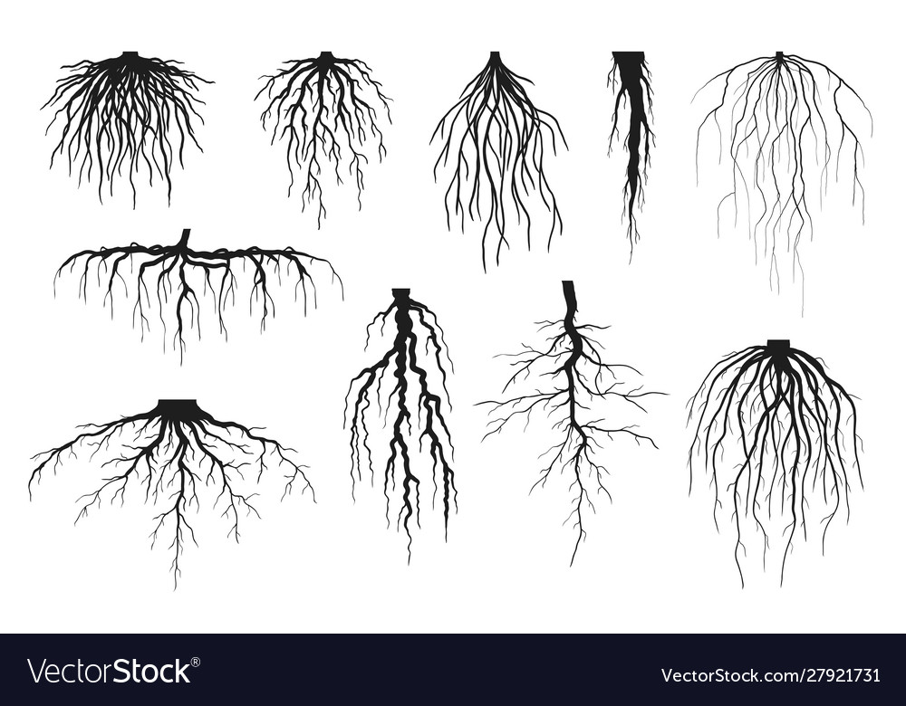Roots silhouettes
