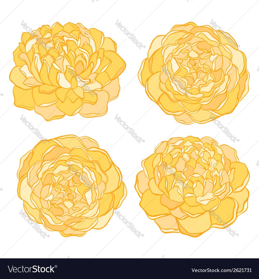 Set of beautiful flower isolated on white
