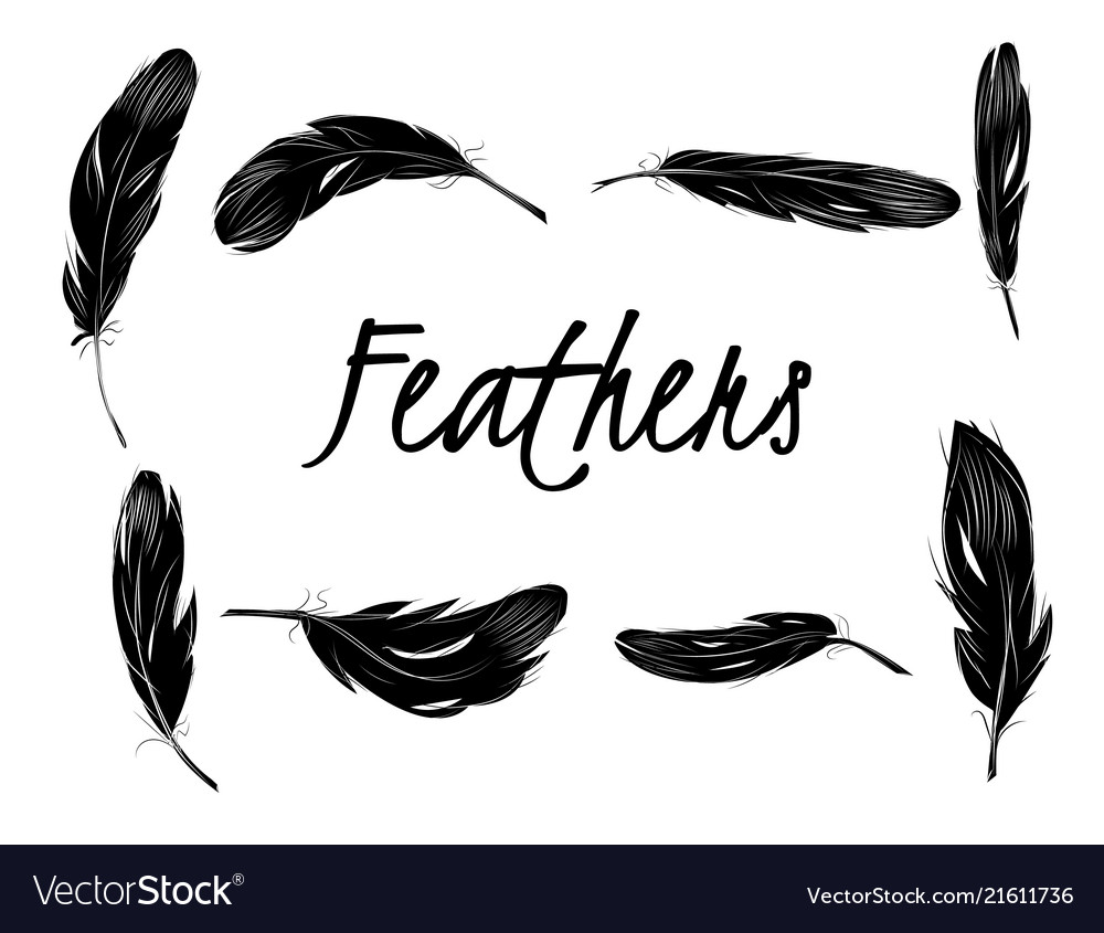 Set isolated black feathers on transparent
