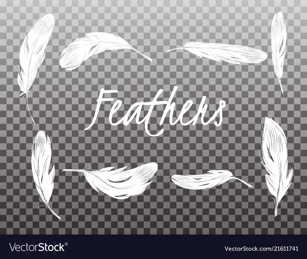 Set of isolated white feathers on transparent