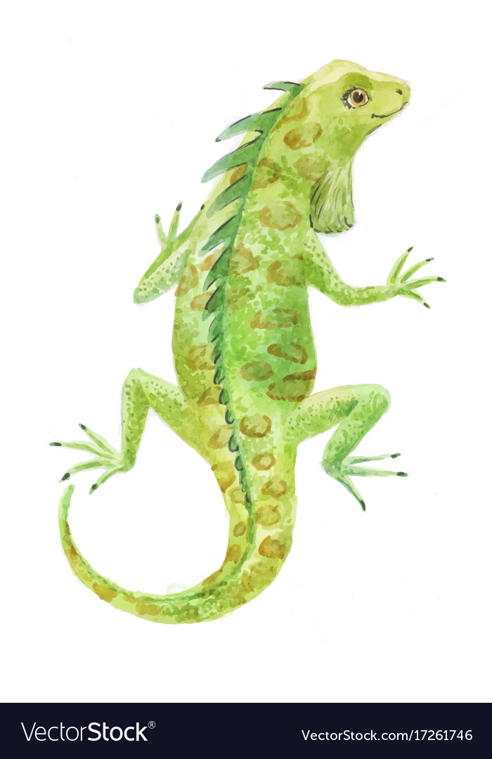 Iguana watercolor