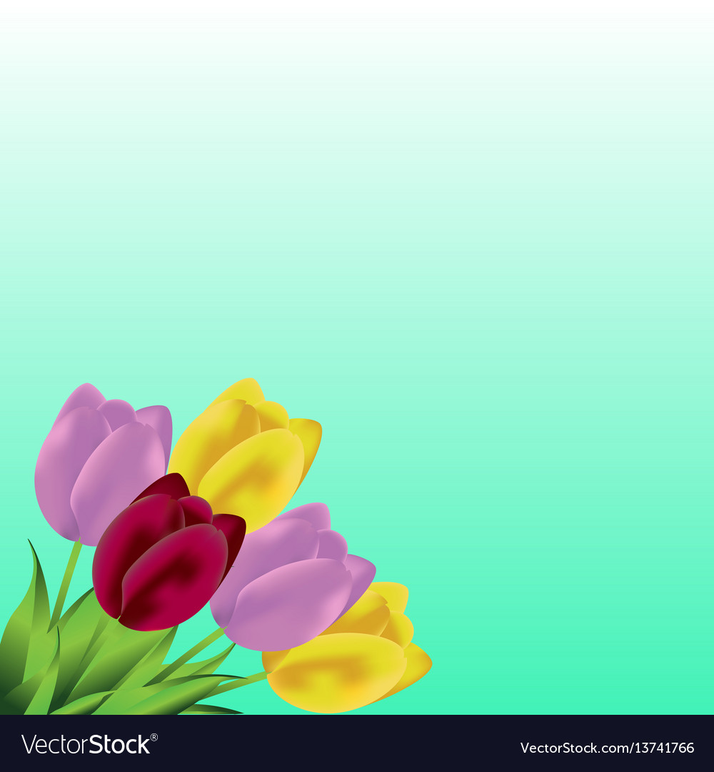 Lovely spring background with tulip flowers