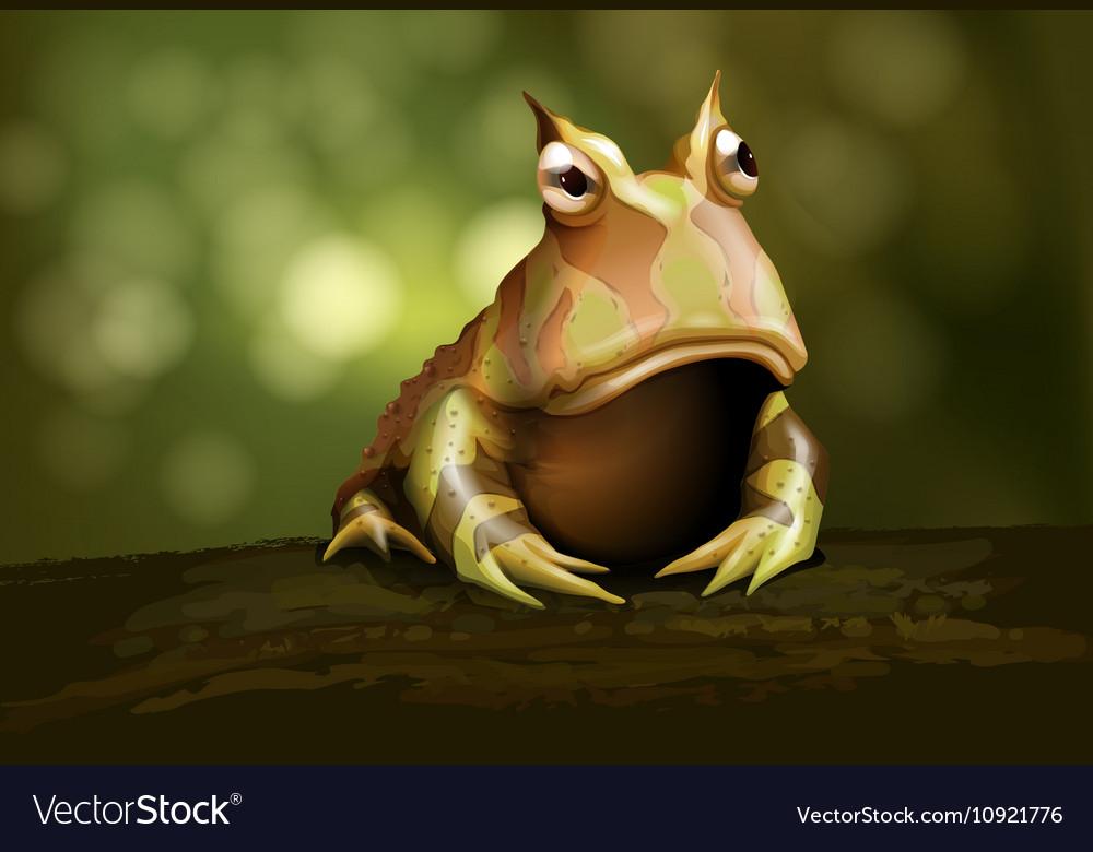 Amazon Horned Frog vector image