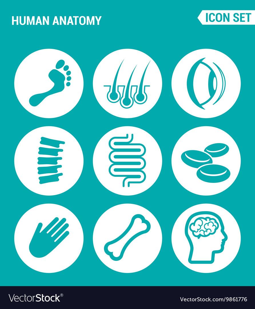 Set of round icons white Human anatomy leg hair