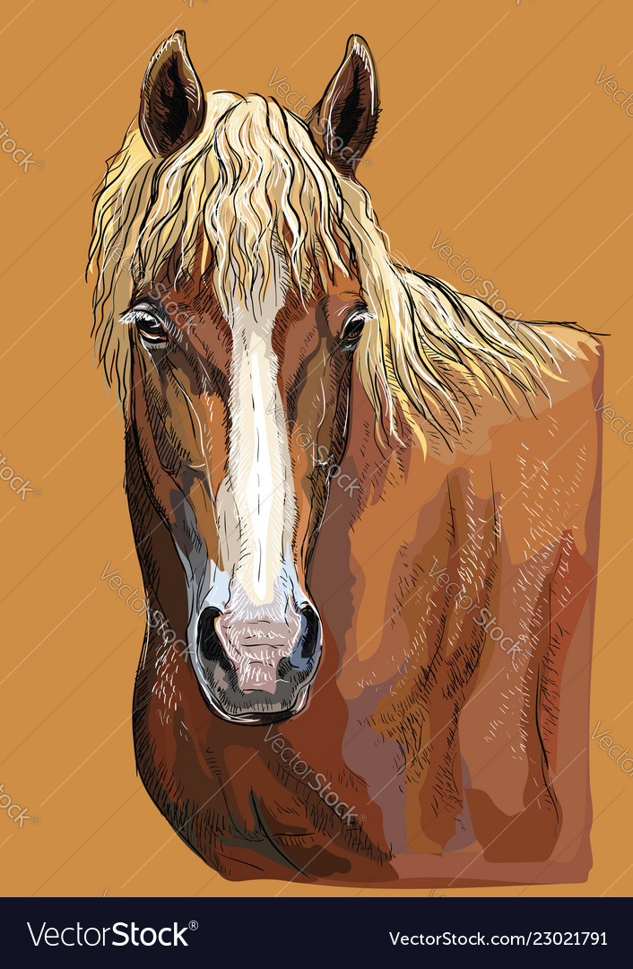 Draft Horse Head Vector Images 24