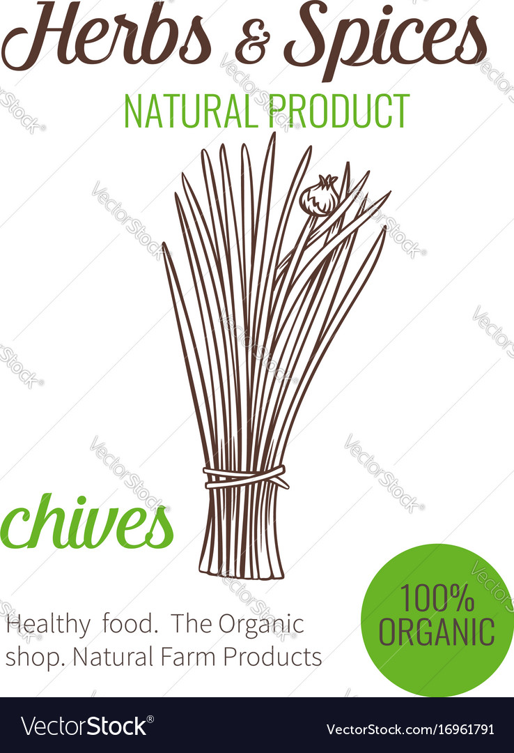Hand drawn chives