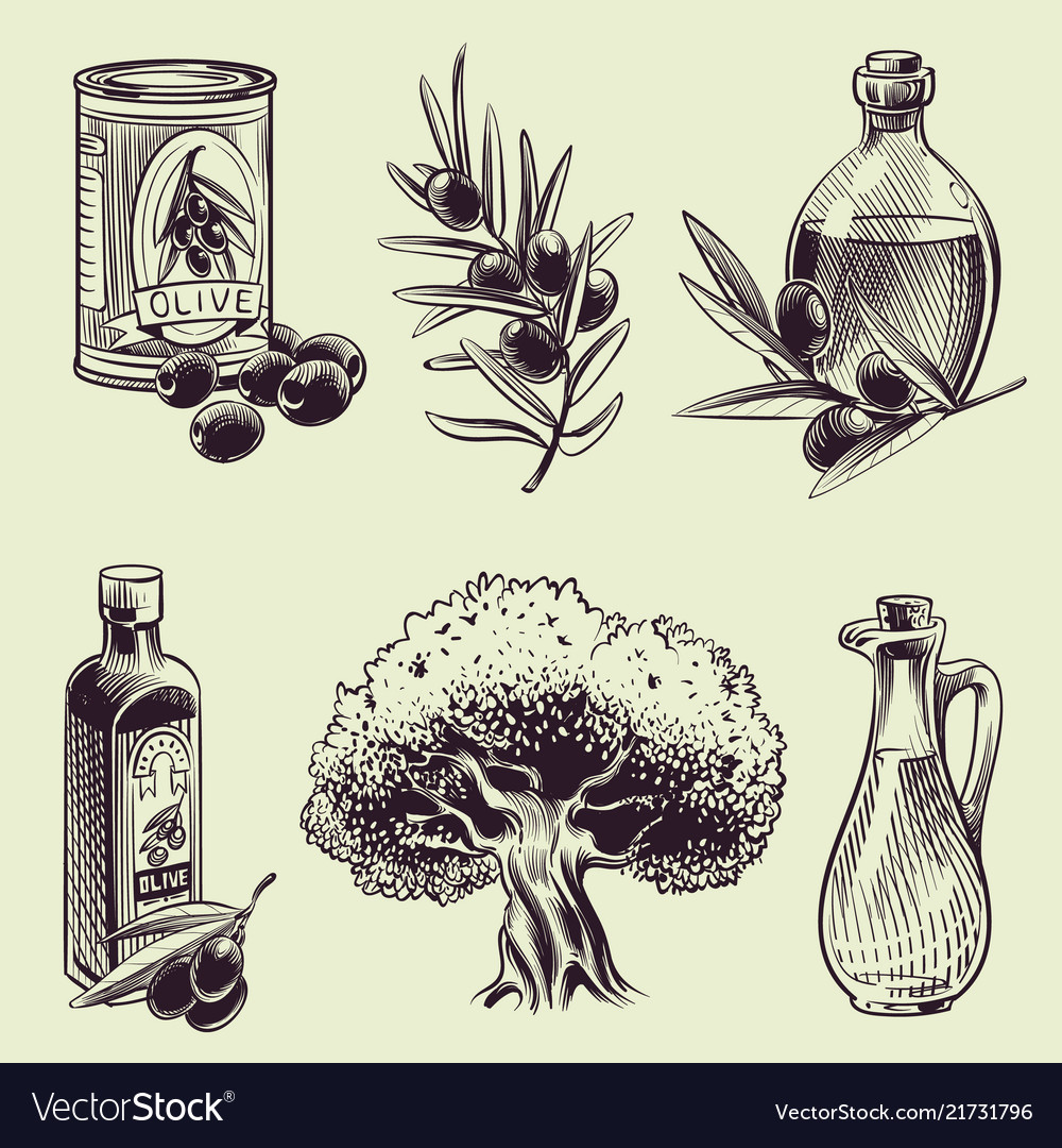Hand drawing olives vintage olive branches oil