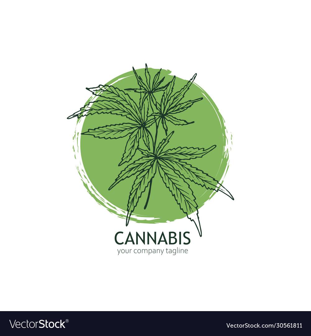 Cannabis logo template hand drawn hemp leaves