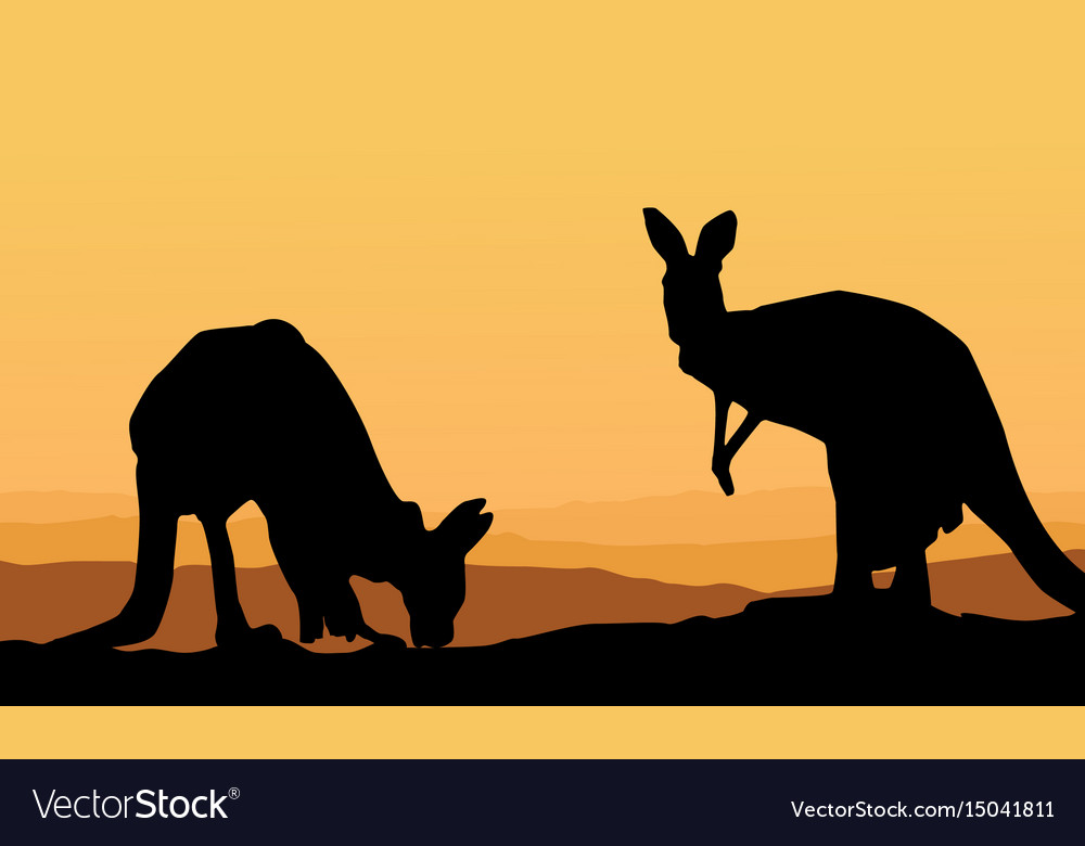 Two kangaroo scenery silhouette collection