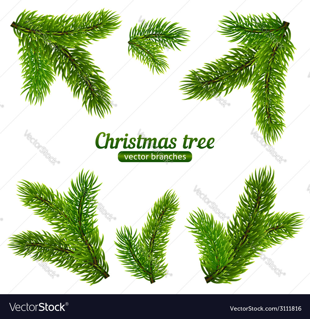 Christmas Branch Vector.Christmas Tree Branches