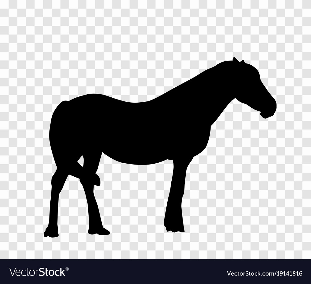 Sticker to car silhouette horse
