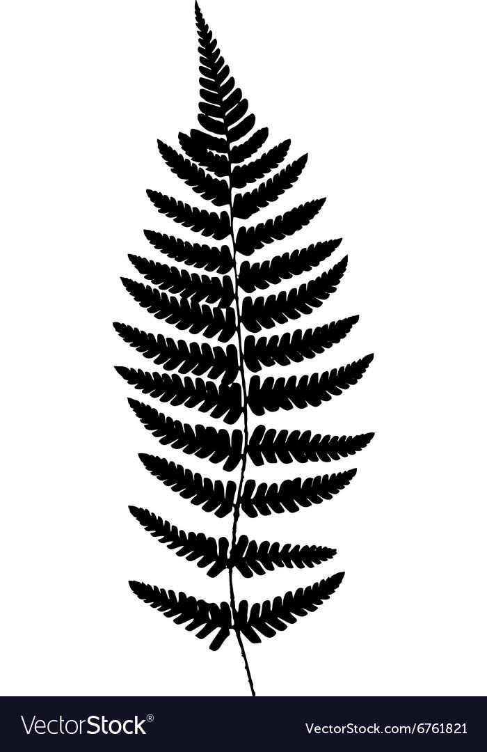 Fern frond black silhouette