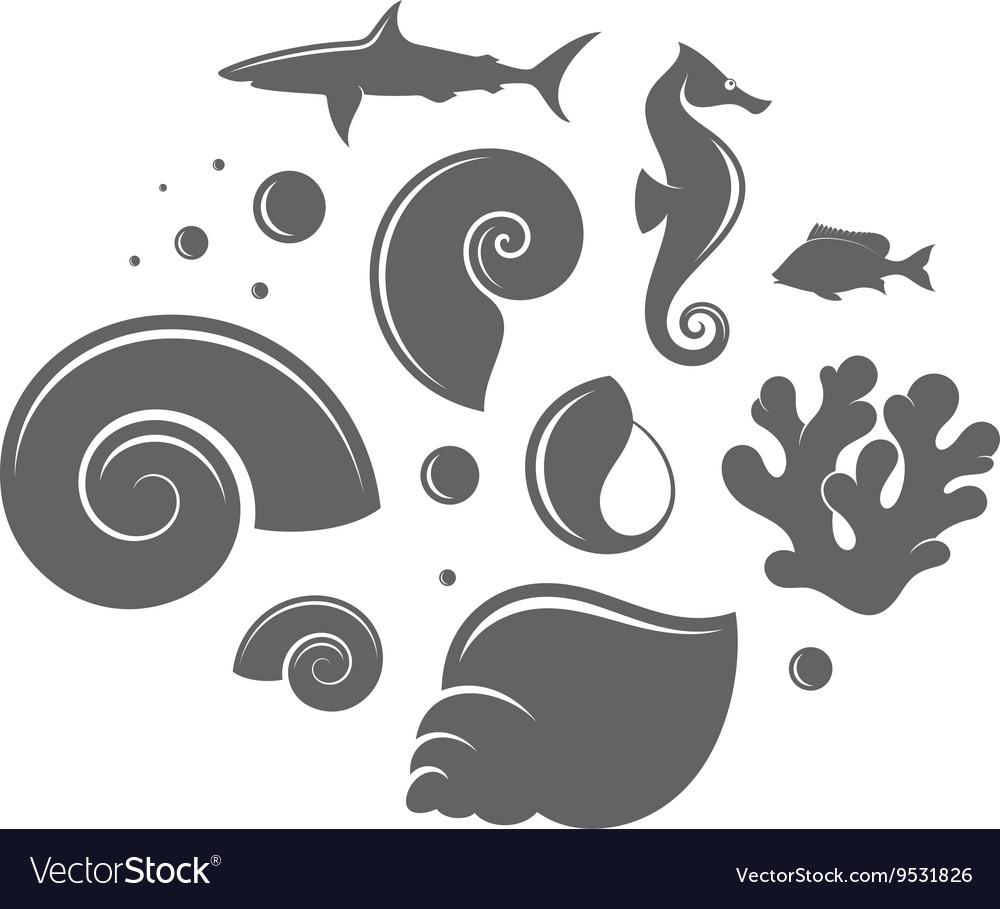 Shell and fish