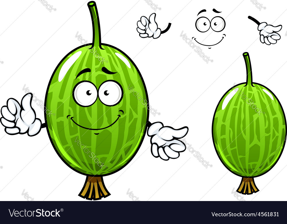 Cartoon green gooseberry fruit character vector image