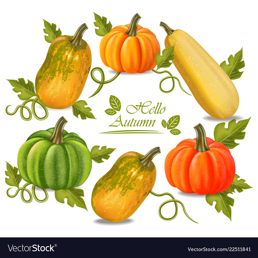 Autumn colorful pumpkins frame fall season