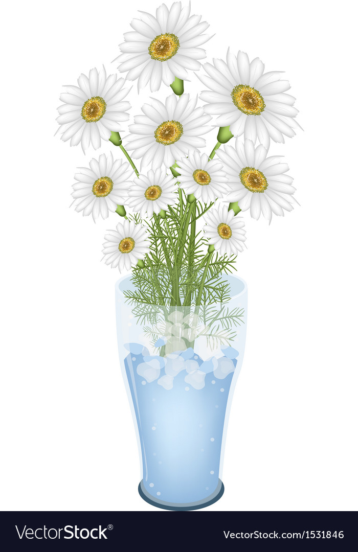 Lovely White Daisy Flowers In Glass Vase Vector Image