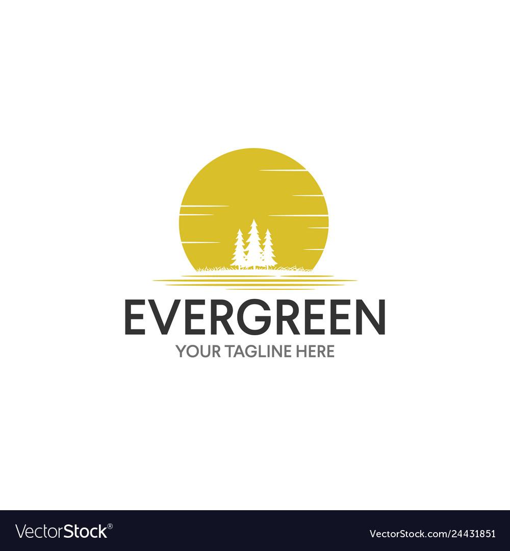 Vintage evergreen pine tree logo design