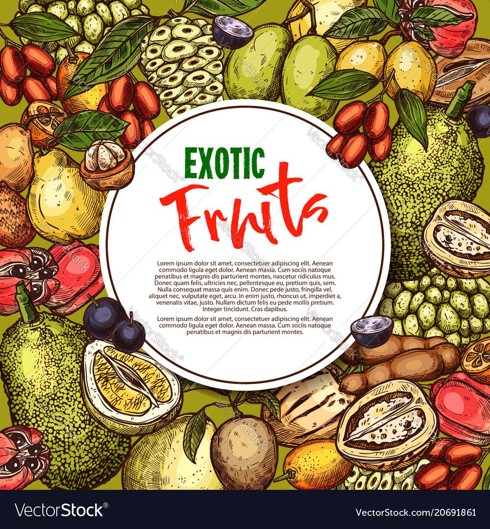 Fruit sketch poster exotic fruits