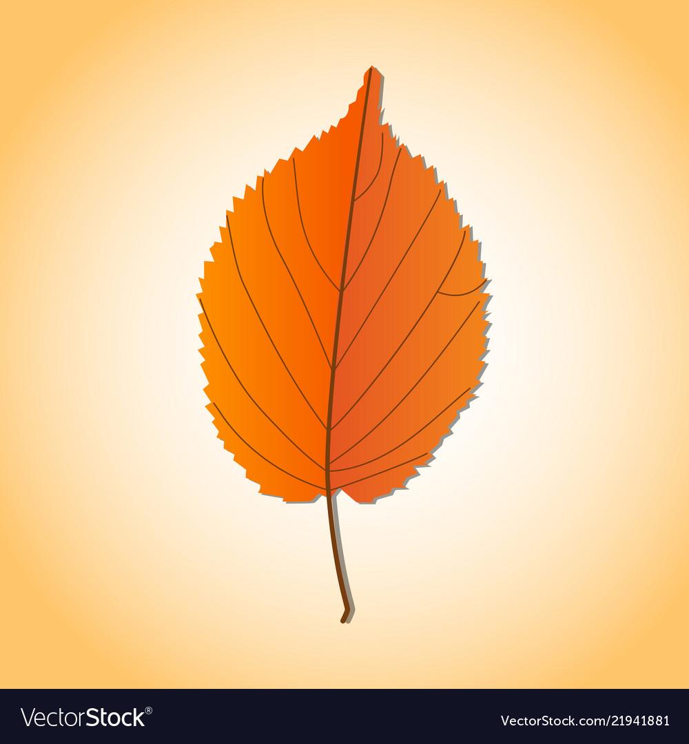 Autumn leaves set isolated on white background