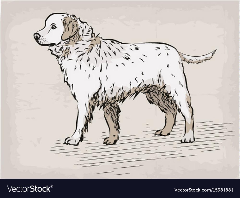 Dog labrador retriever beautiful serious animal