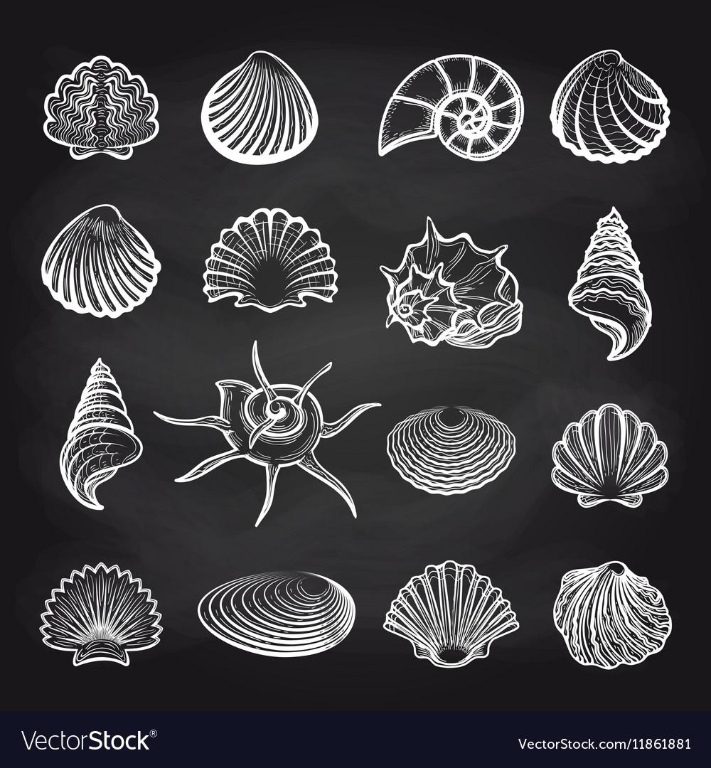 Sea shells on chalckboard